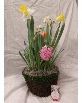 Spring Blooming Bulb Garden Plant