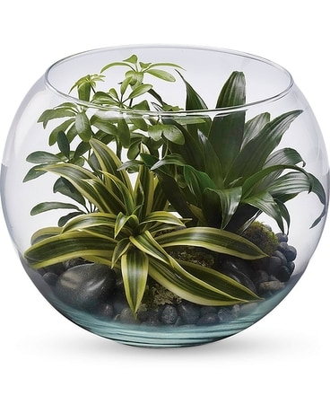 Bubble Bowl Terrarium Plant