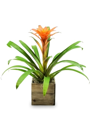 Tropical Bromeliad Planter Plant