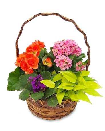 Bright Blooming Basket Plant