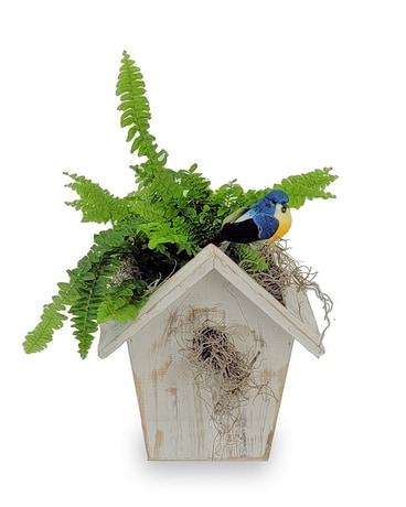 Birdhouse Table Fern Plant