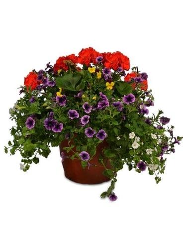 Patio Planters In Appleton Wi Memorial Florists Greenhouses