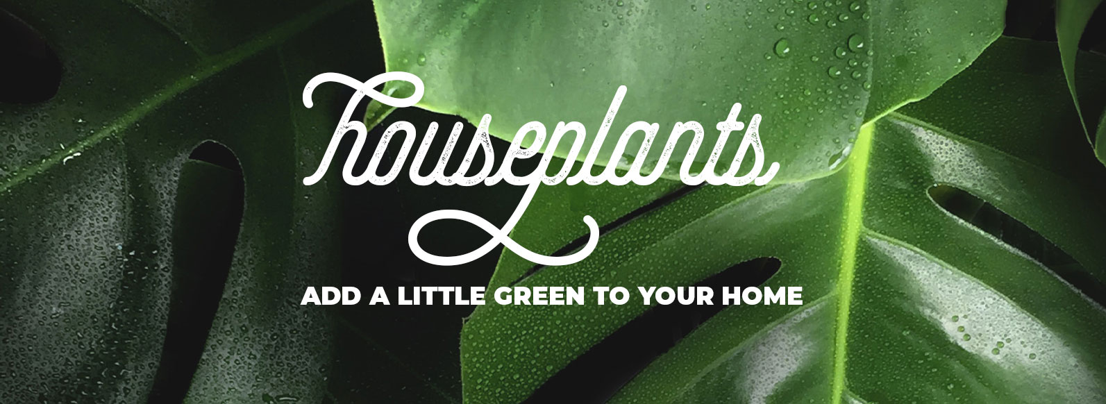 House Plants - add a little green to your home.