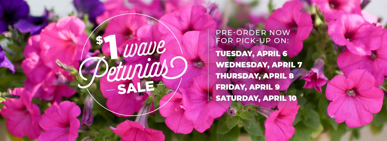 $1 Wave Petunias Sale:  Pre-order now for pickup on Tuesday April 6, Wednesday April 7, Thursday April 8, Friday April 9, or Saturday April 10.