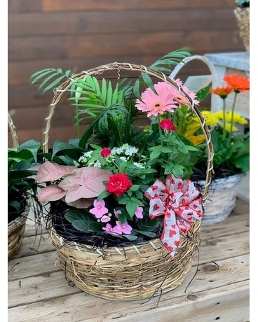 Basket of Blooming Plants Plant