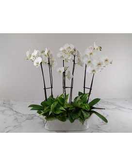 Imperial Orchids Flower Arrangement