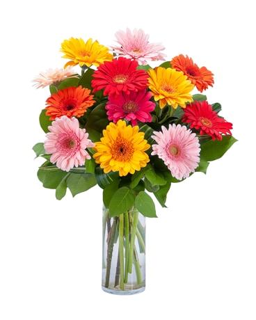 Grand Gerberas Bouquet for Boss's Day