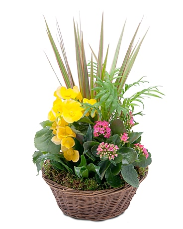 Bloomin' Sunshine Basket Flower Arrangement
