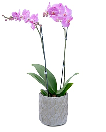 Beauty Orchid Flower Arrangement
