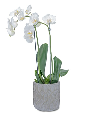 White Elegance Orchid Flower Arrangement