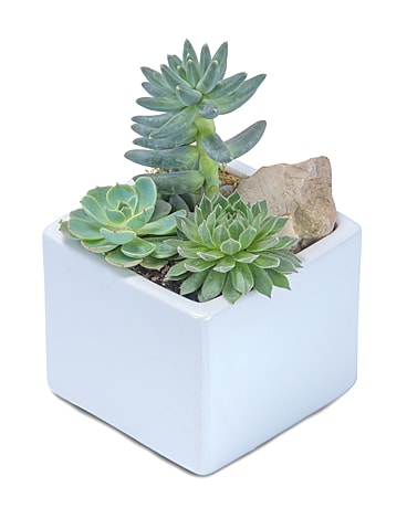 Mini Stunning Succulent Flower Arrangement
