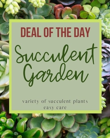 Deal of the Day - Succulent Garden