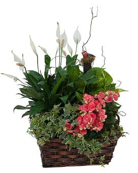 Living Blooming  Garden Basket Flower Arrangement