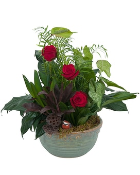 Dish Garden with Fresh Roses Plant