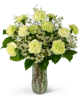 A Dozen Sweet Green Carnations Flower Arrangement