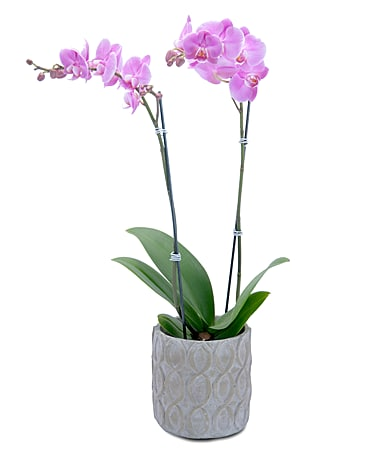 Purple Beauty Orchid Flower Arrangement