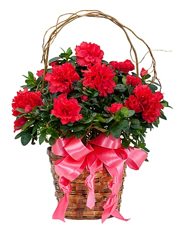 Graceful Azalea Flower Arrangement