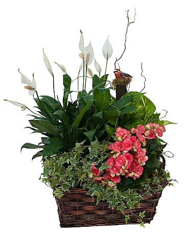 Sympathy Plants Delivery St  John's NL - Holland Nurseries