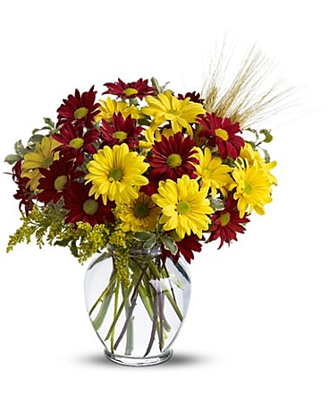 Fall for Daisies Flower Arrangement