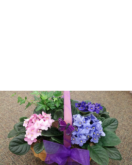 Woodland's Own African Violet,Ivy Basket