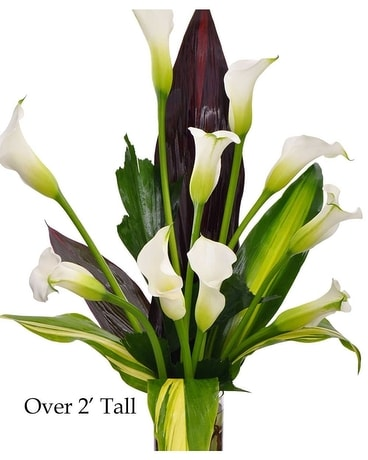 Majestic Calla Lilies Flower Arrangement