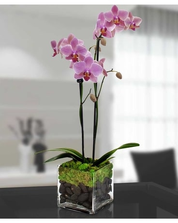 Double Phalaenopsis Orchid Flower Arrangement
