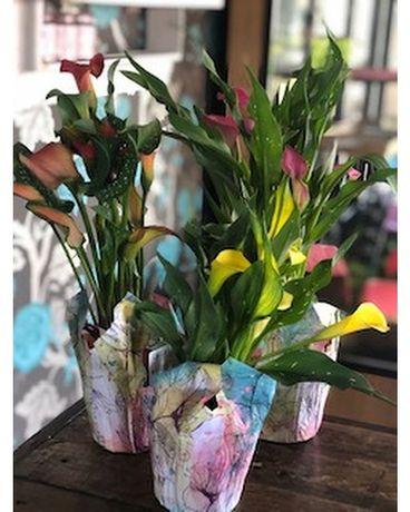 Calla Lily Plant In Eau Claire Wi Eau Claire Floral