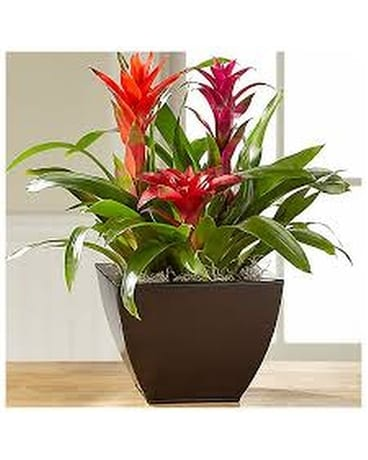 In Living Color Miniature Bromeliad Garden Plant