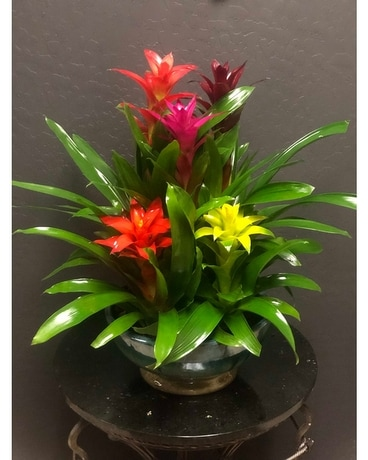 In Living Color Miniature Bromeliad Garden Large Plant