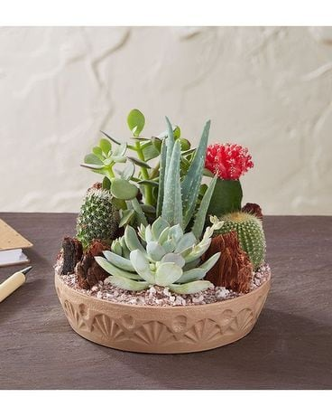 EXOTIC SUCCULENT AND CACTUS DISH GARDEN Flower Arrangement