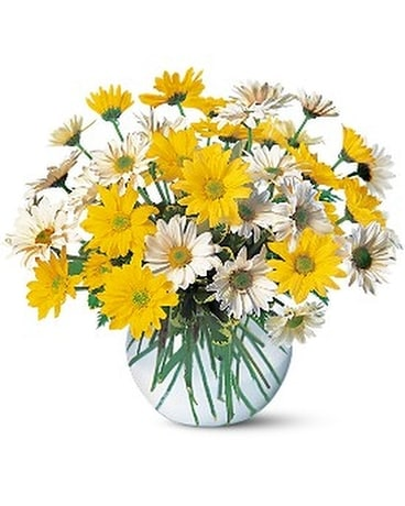 Dashing Daisies - by Top Florist Custom product