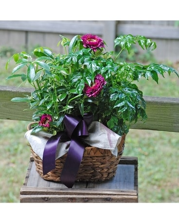 Small Dishgarden Plant
