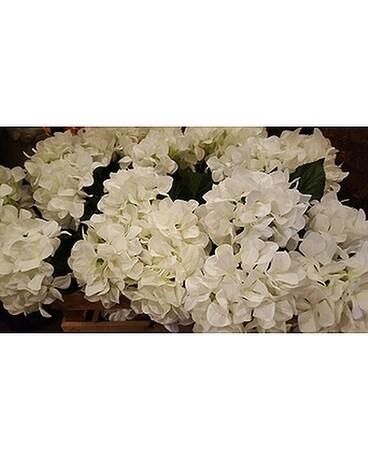 White Hydrangeas In Loudonville Oh Four Seasons Flowers Gifts