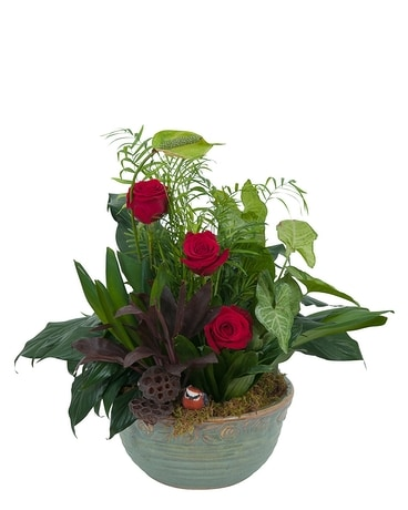 Rosy Dish Garden Flower Arrangement