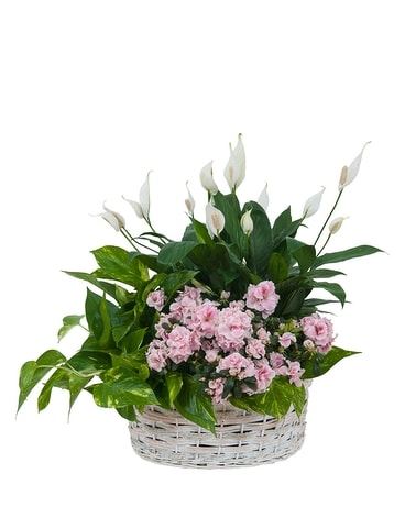 Living Blooming  White Garden Basket Flower Arrangement