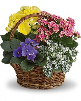 Spring Has Sprung Mixed Basket Flower Arrangement
