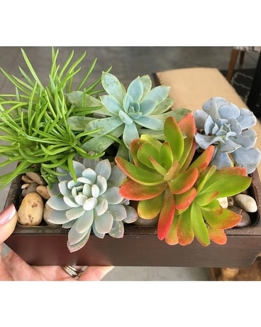 Succulent Planter Box Plant