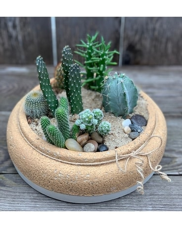 Cacti Garden in Cinched Pot Plant