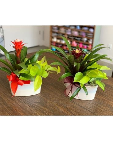 Bromeliad Planter Gifts