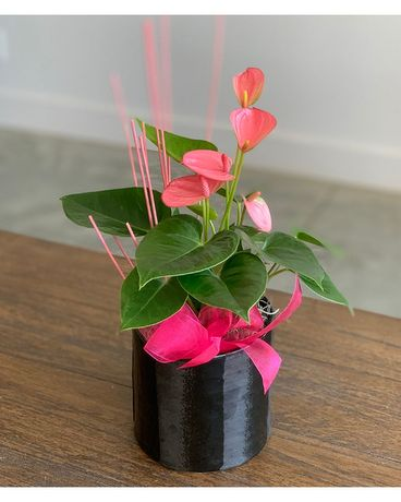 Anthurium in Ceramic Flower Arrangement