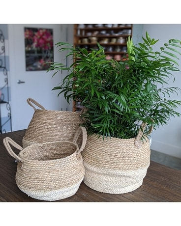 Collapsible Straw Baskets Gifts