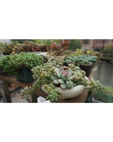 Mixed Succulents - by Cedar Grove Gardens Flower Arrangement