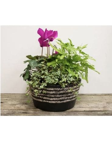 7 inch Spring Mix Planter Flower Arrangement