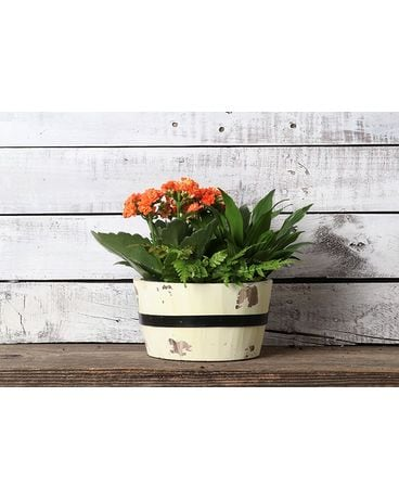 6 inch Spring Woods Planter - Assorted Colors Flower Arrangement