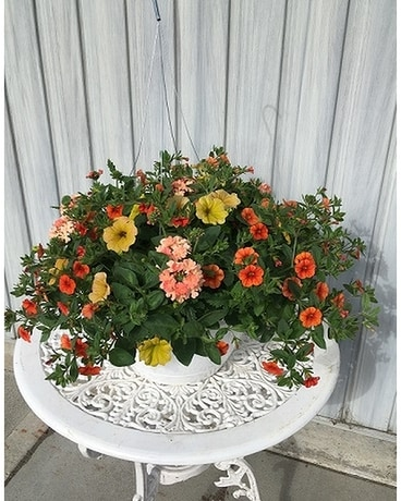 Summer Hanging Baskets - Sunset Plant