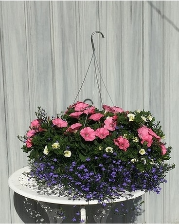 Summer Hanging Baskets - Cheery Blooms Plant