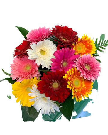 Gorgeous Gerbera Bouquet