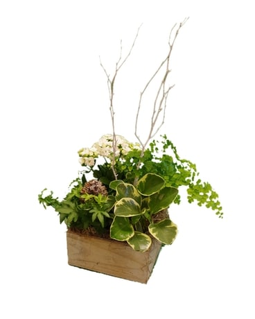 Winter Forest Box Dish Garden Plant