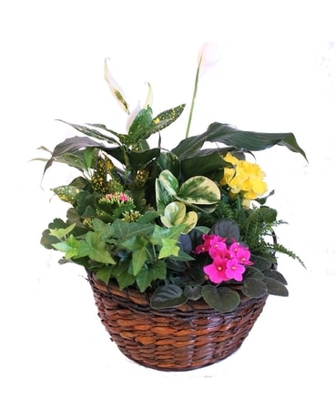Sunshine and Joy Basket Dish Garden Plant