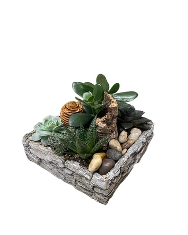 Niagara Stone Collection - Square Succulents